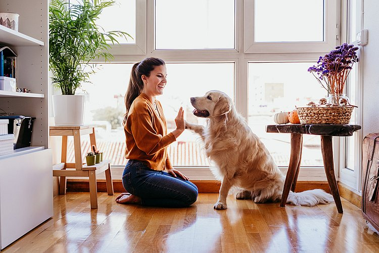 How much pet ownership really costs (and where personal loans can help)