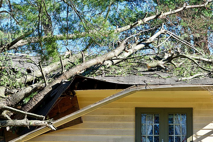 Does home insurance cover tree root damage?